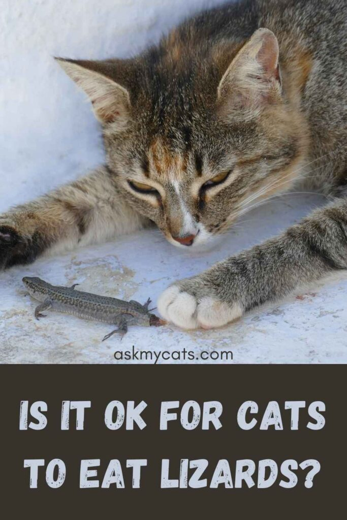 Is It OK For Cats To Eat Lizards?