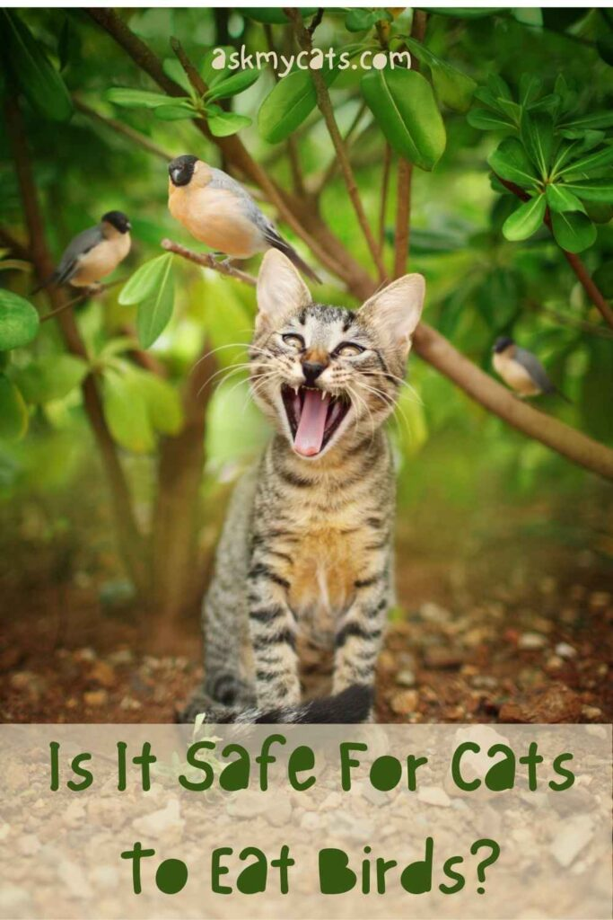 Is It Safe For Cats To Eat Birds?