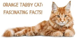 Orange Tabby Cat Fascinating Facts! Check if You Know Them All!
