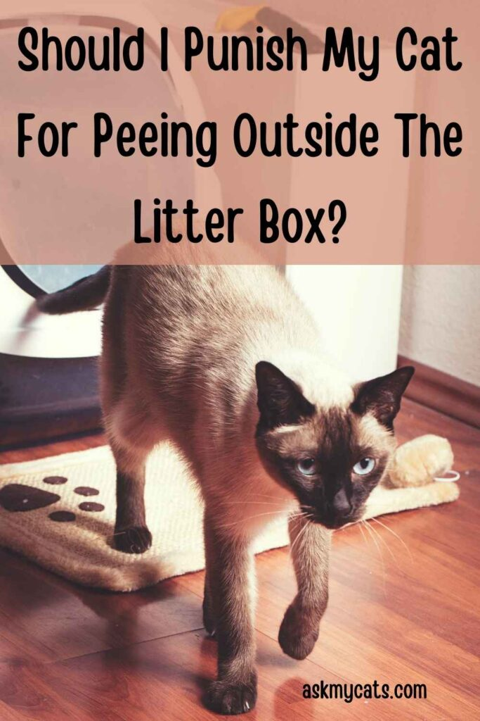 Should I Punish My Cat For Peeing Outside The Litter Box?