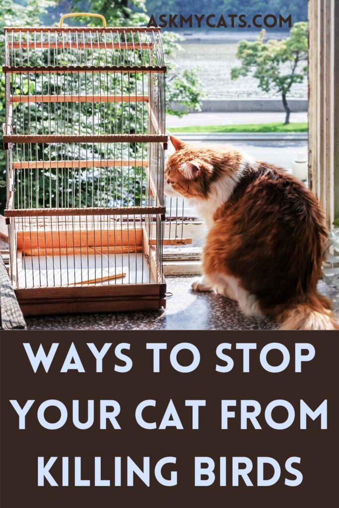 Ways to Stop Your Cat From Killing Birds