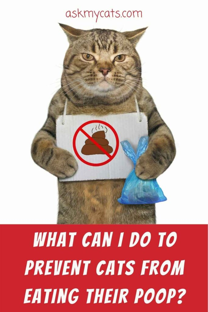 What Can I Do To Prevent Cats From Eating Their Poop?