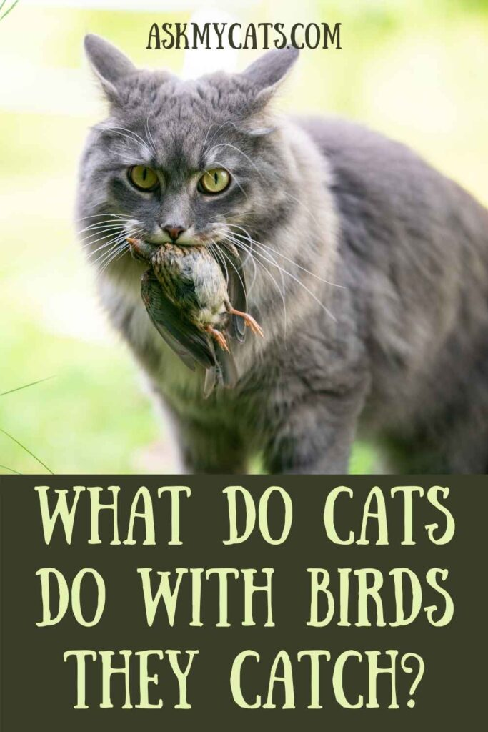 What Do Cats Do With Birds They Catch?