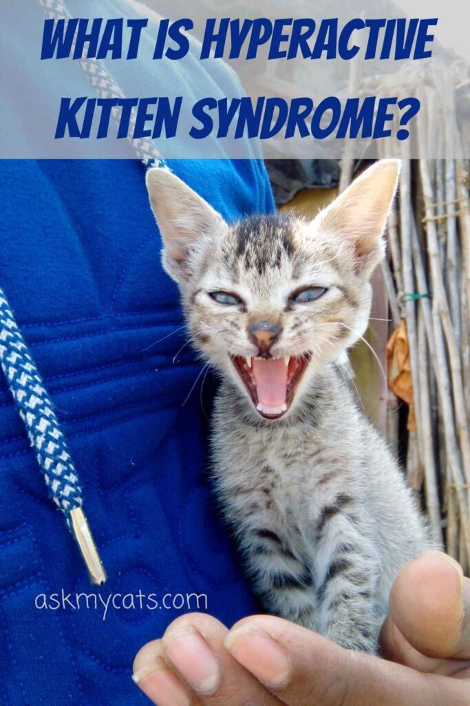 What Is Hyperactive Kitten Syndrome?