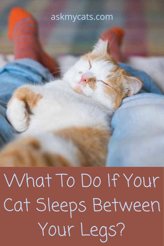 What To Do If Your Cat Sleeps Between Your Legs?