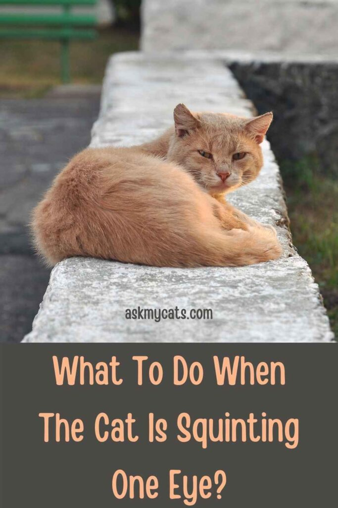 What To Do When The Cat Is Squinting One Eye?