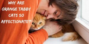 Why Are Orange Tabby Cats So Affectionate? Do They Love Us?