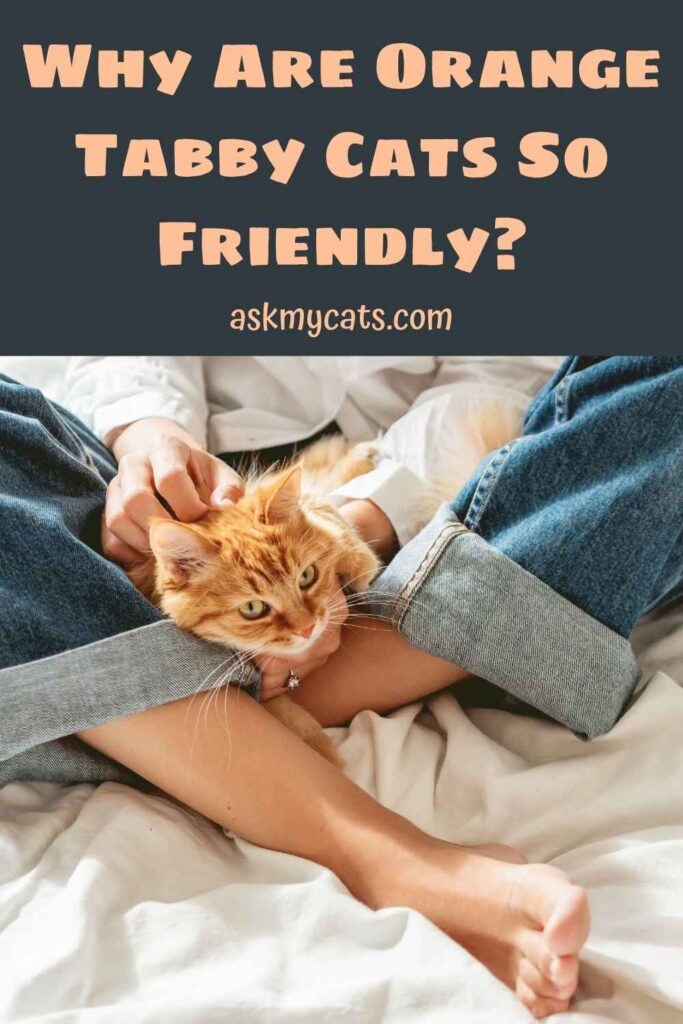 Why Are Orange Tabby Cats So Friendly?