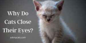Why Do Cats Close Their Eyes? Are They Trying To Tell Something?