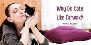 Why Do Cats Like Earwax? Isn't That Disgusting?