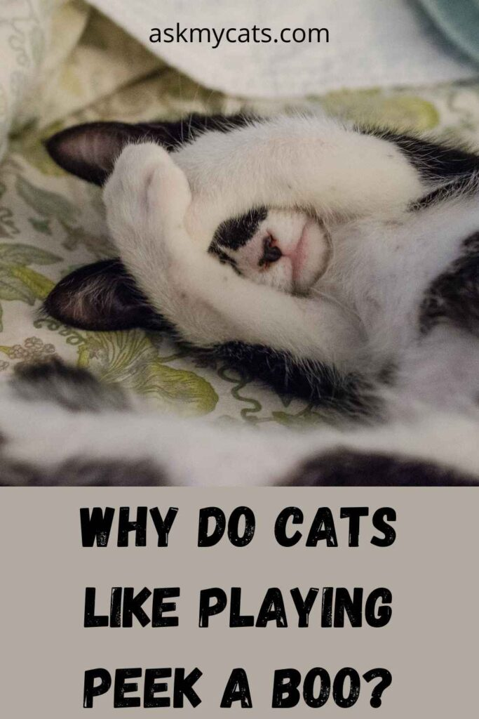 Why Do Cats Like Playing Peek A Boo?