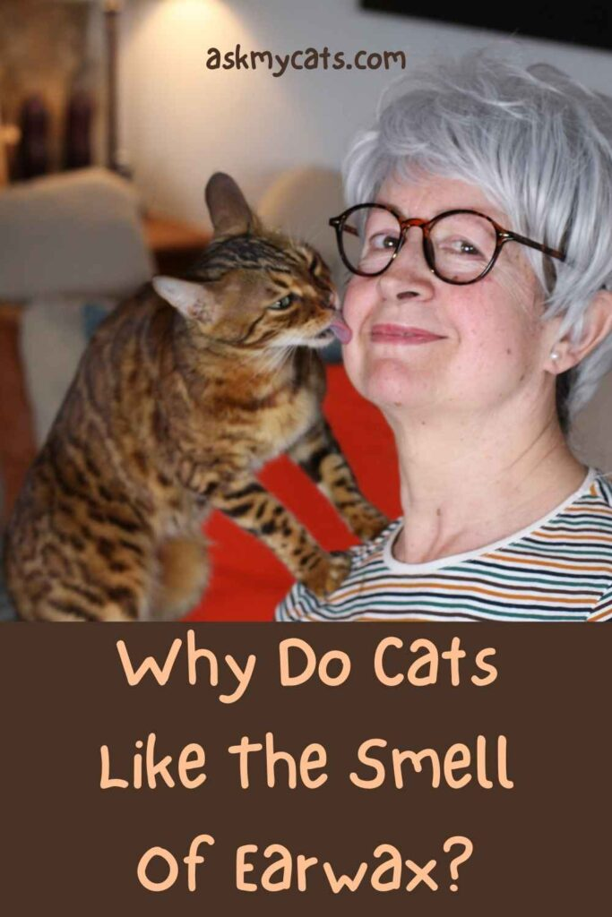 Why Do Cats Like The Smell Of Earwax?
