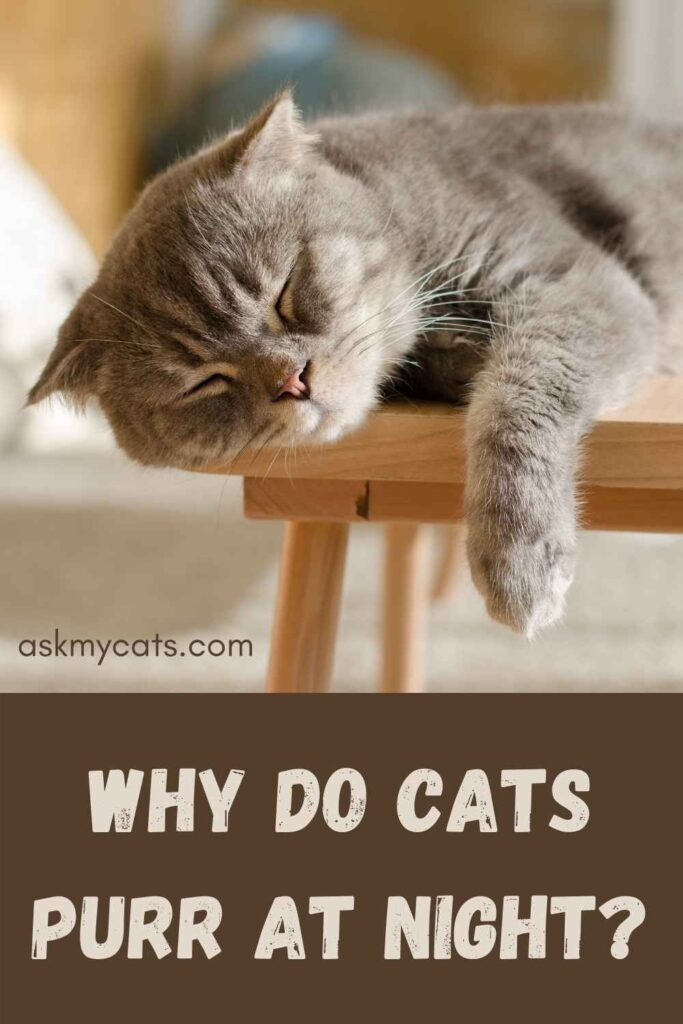 Why Do Cats Purr At Night?