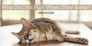 Why Do Cats Purr When They Sleep? Is He Enjoying His Sleep?