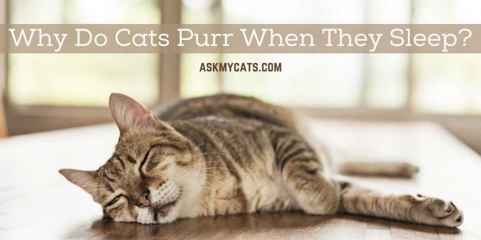 Why Do Cats Purr When They Sleep