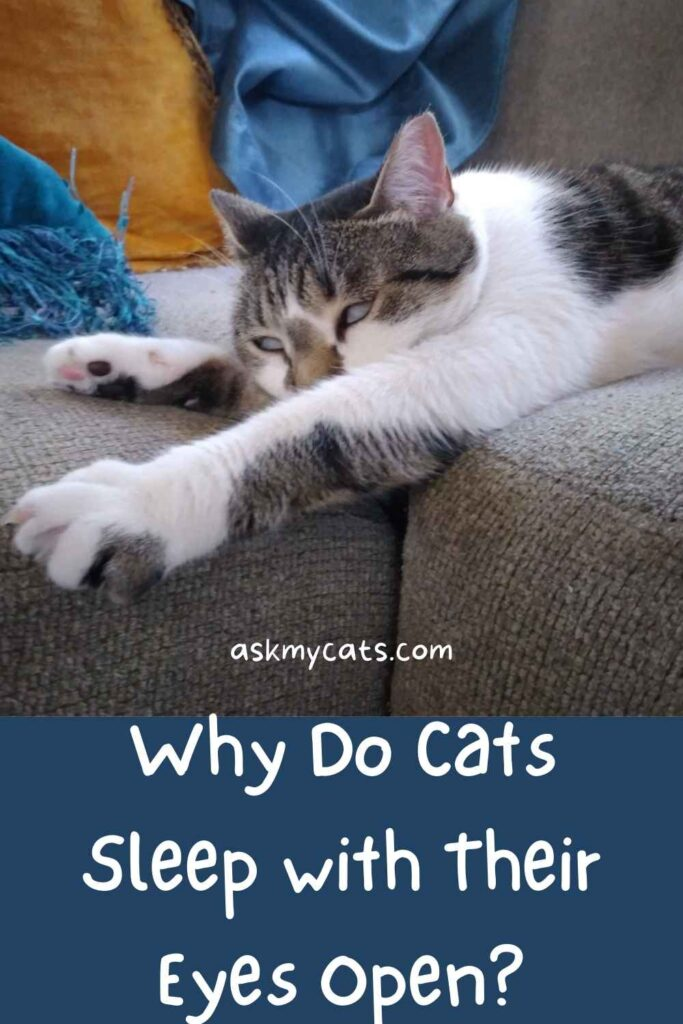 Why Do Cats Sleep with Their Eyes Open?