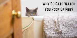 Why Do Cats Watch You Poop Or Pee? Why Are They So Curious?