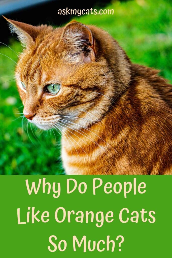 Why Do People Like Orange Cats So Much?