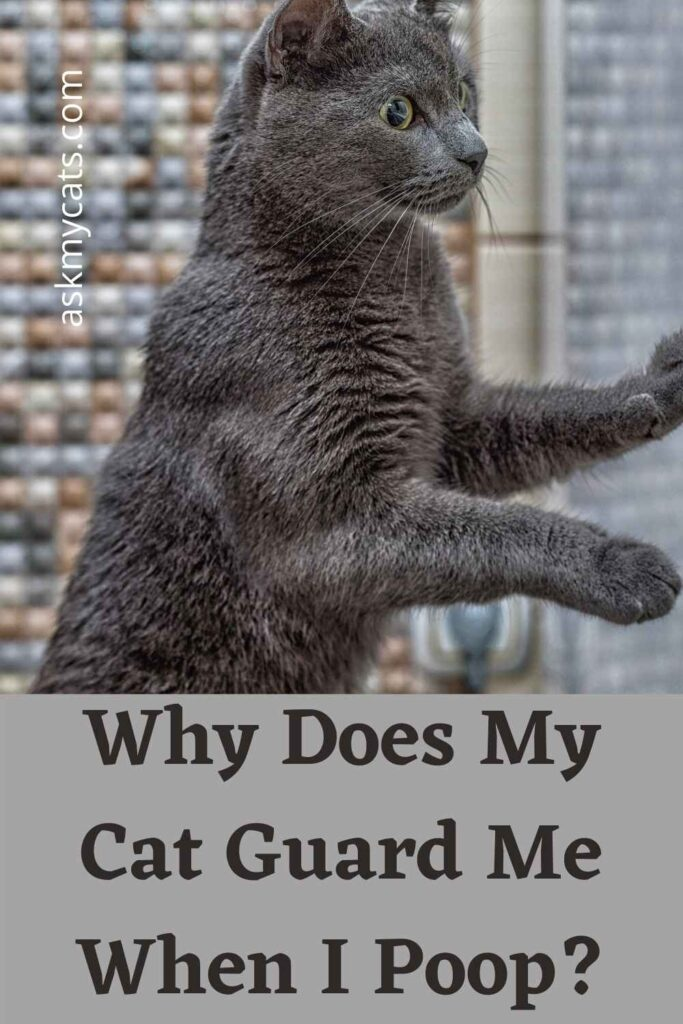 Why Does My Cat Guard Me When I Poop?