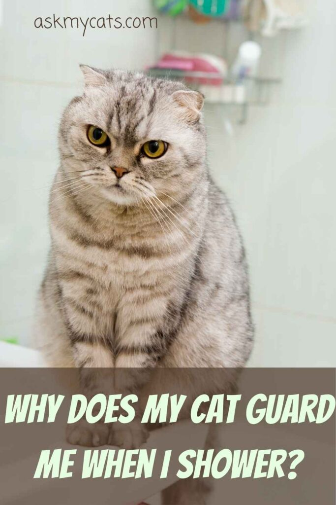 Why Does My Cat Guard Me When I Shower?