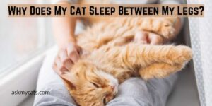 Why Does My Cat Sleep Between My Legs? The Reasons You Must Know!
