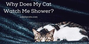 Why Does My Cat Watch Me Shower? Do Cats Understand Privacy?