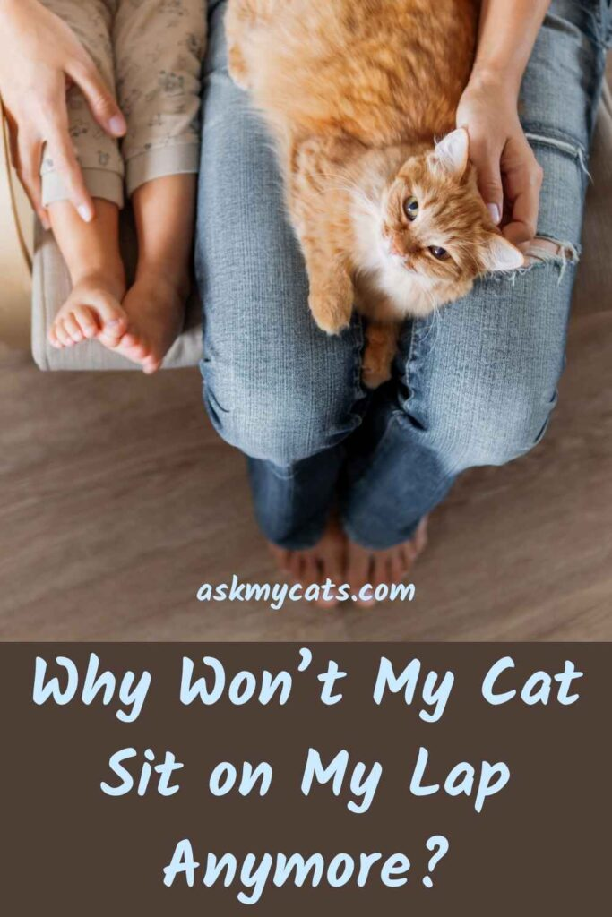Why Won't My Cat Sit on My Lap Anymore?