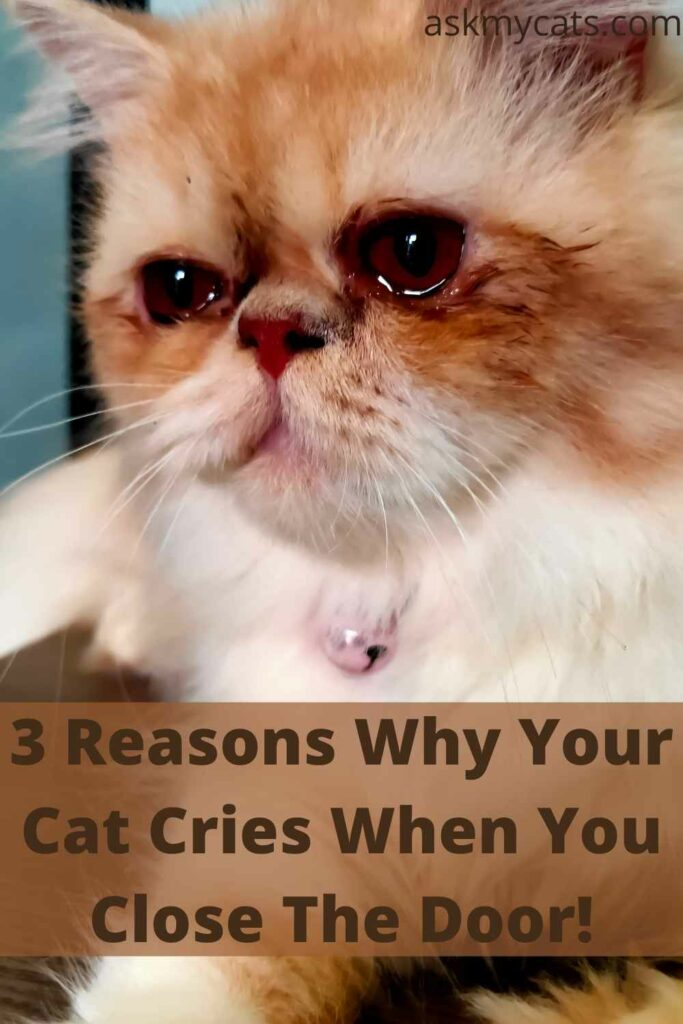 3 Reasons Why Your Cat Cries When You Close The Door!