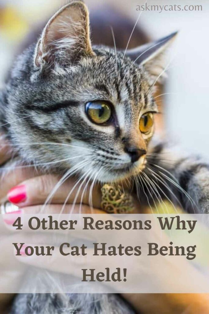 4 Other Reasons Why Your Cat Hates Being Held!