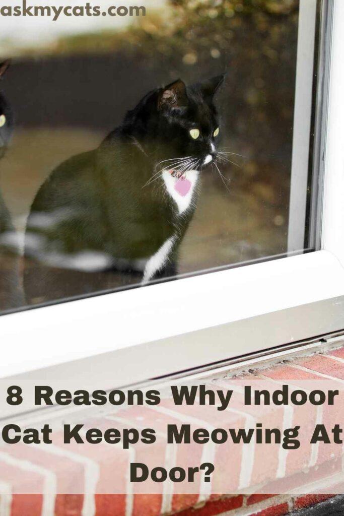 8 Reasons Why Indoor Cat Keeps Meowing At Door?