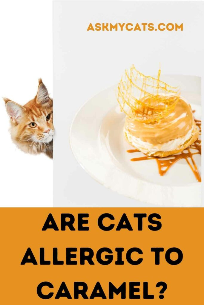 Are Cats Allergic To Caramel?