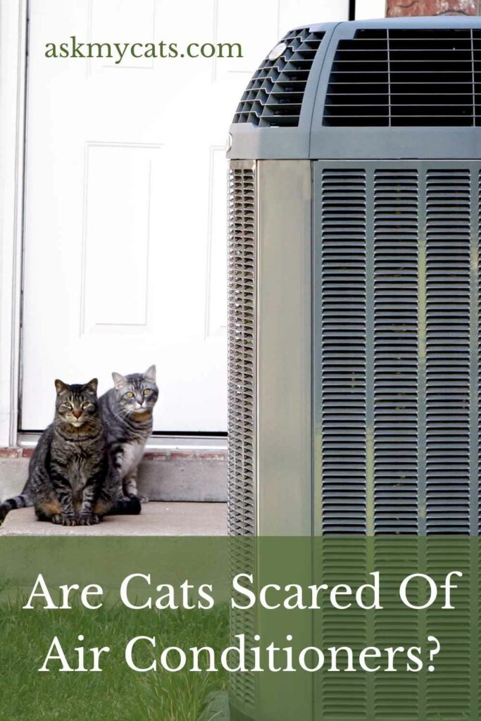 Are Cats Scared Of Air Conditioners?