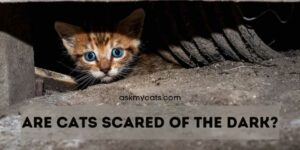 Are Cats Scared Of The Dark? Do They See Ghosts In Dark?