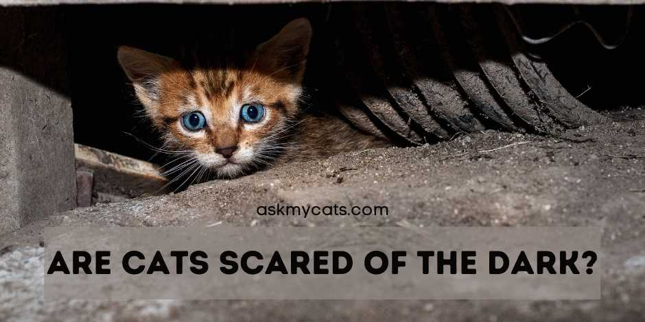 Are Cats Scared Of The Dark?
