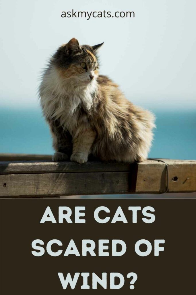 Are Cats Scared Of Wind?