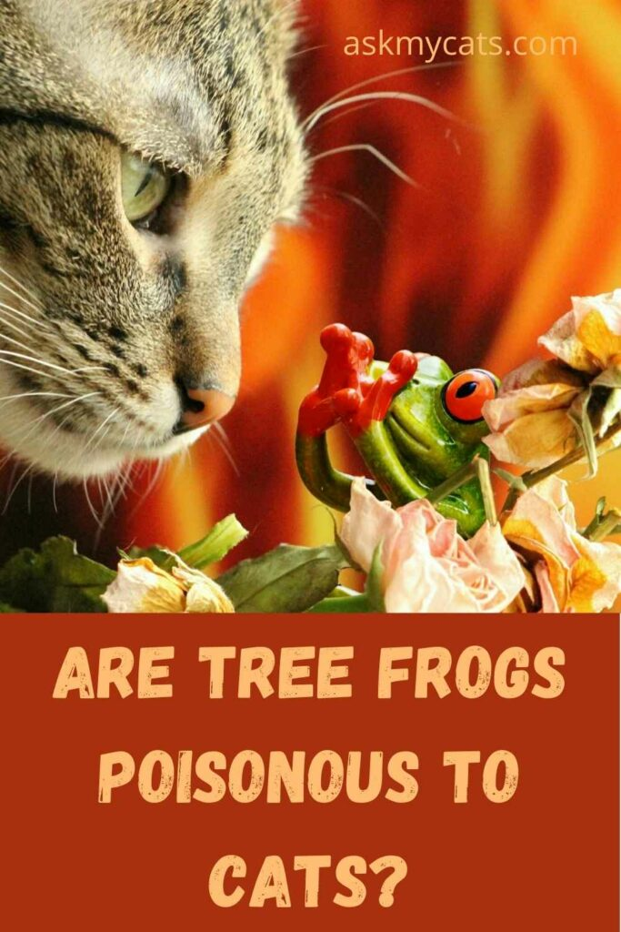 Are Tree Frogs Poisonous To Cats?