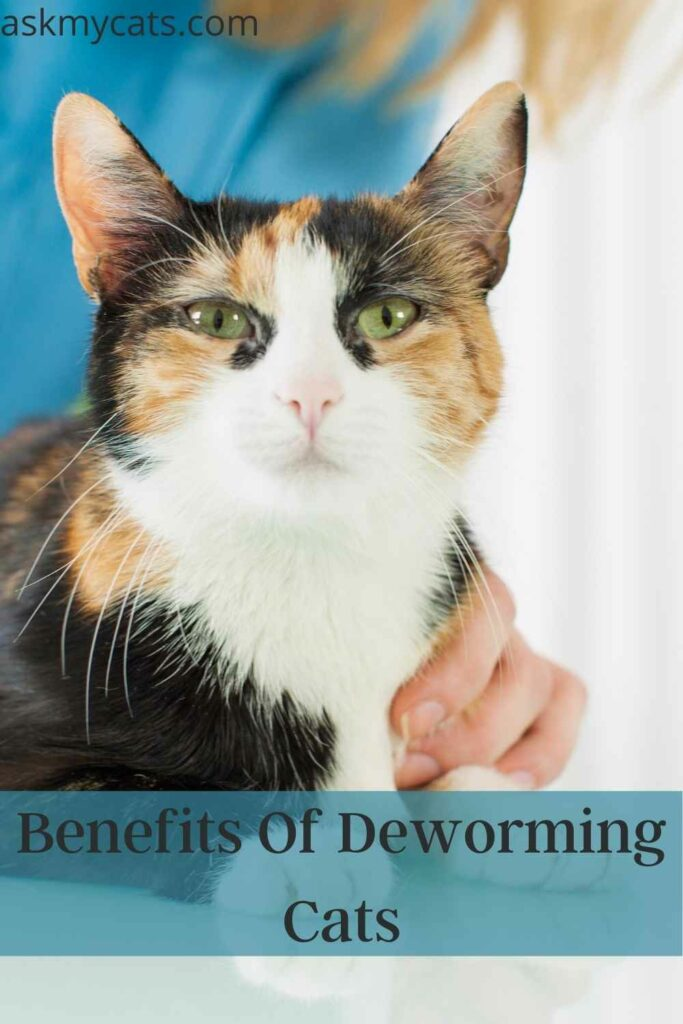 Benefits Of Deworming Cats