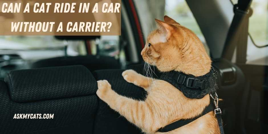 Can A Cat Ride In A Car Without A Carrier