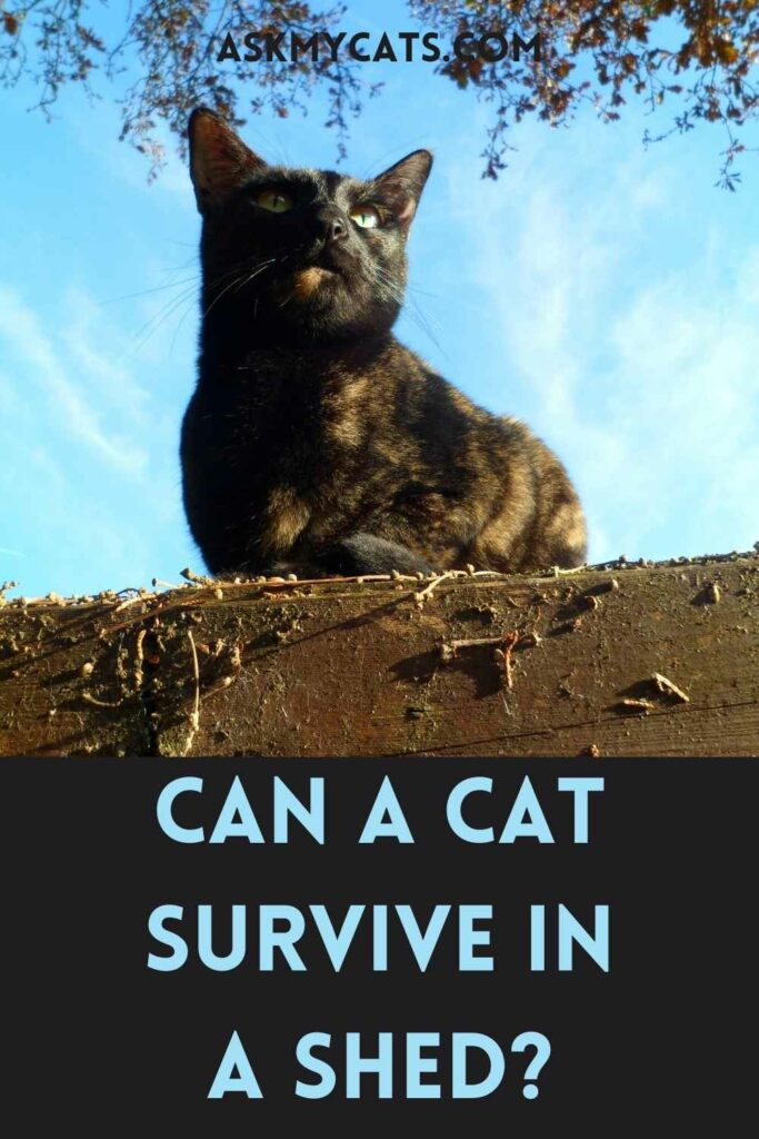 Can A Cat Survive In A Shed?