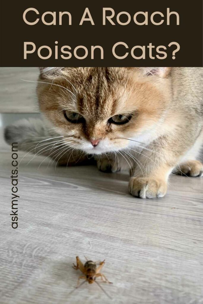Can A Roach Poison Cats?