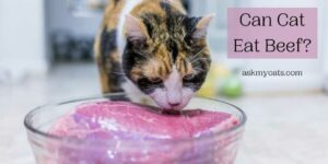 Can Cat Eat Beef? What's Right For Your Cat?