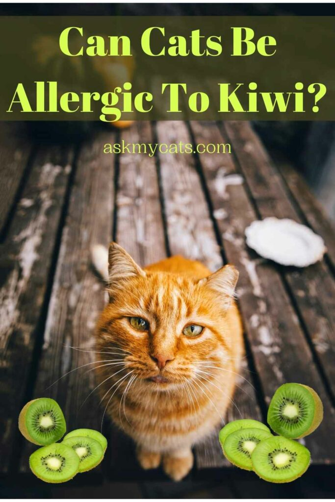 Can Cats Be Allergic To Kiwi?