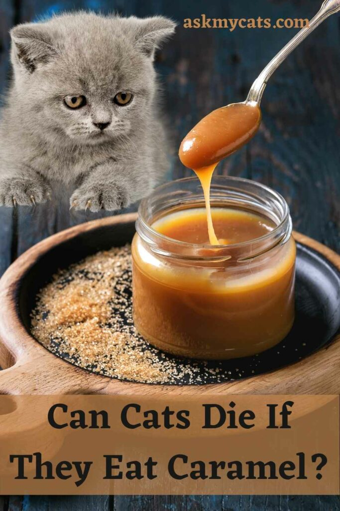 Can Cats Die If They Eat Caramel?