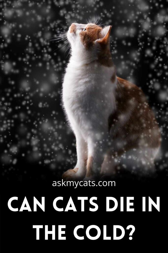 Can Cats Die In The Cold?
