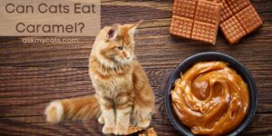 Can Cats Eat Caramel? Is Anything Wrong In That?