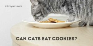 Can Cats Eat Cookies? Are They Safe For Your Pet?