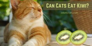 Can Cats Eat Kiwi? Are These Fruits Harmful To Cats?