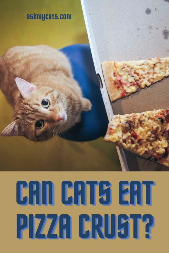 Can Cats Eat Pizza Crust?