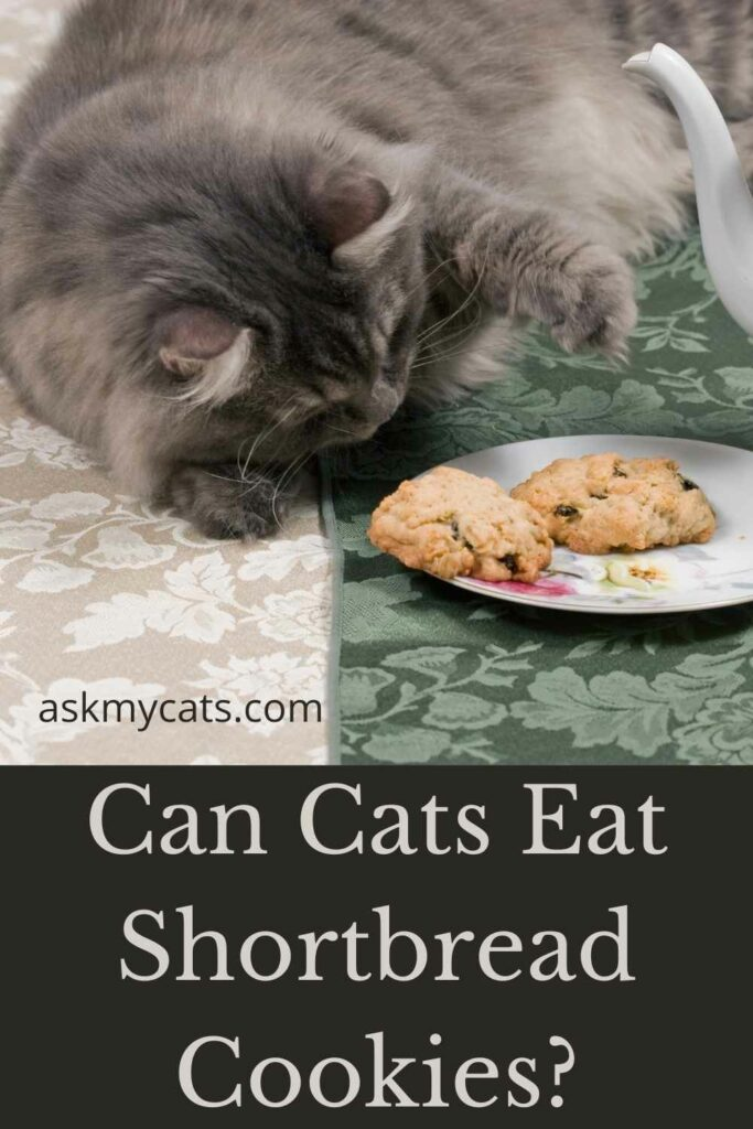 Can Cats Eat Shortbread Cookies?
