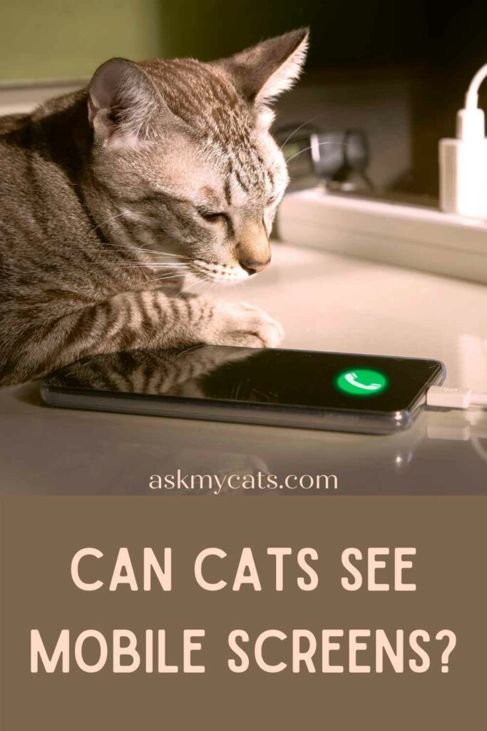 Can Cats See Mobile Screens?